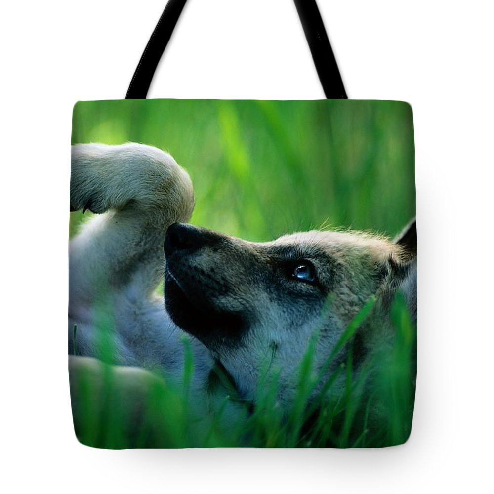 Color Image Tote Bag featuring the photograph Eight-week-old Captive Gray Wolf, Canis by Joel Sartore