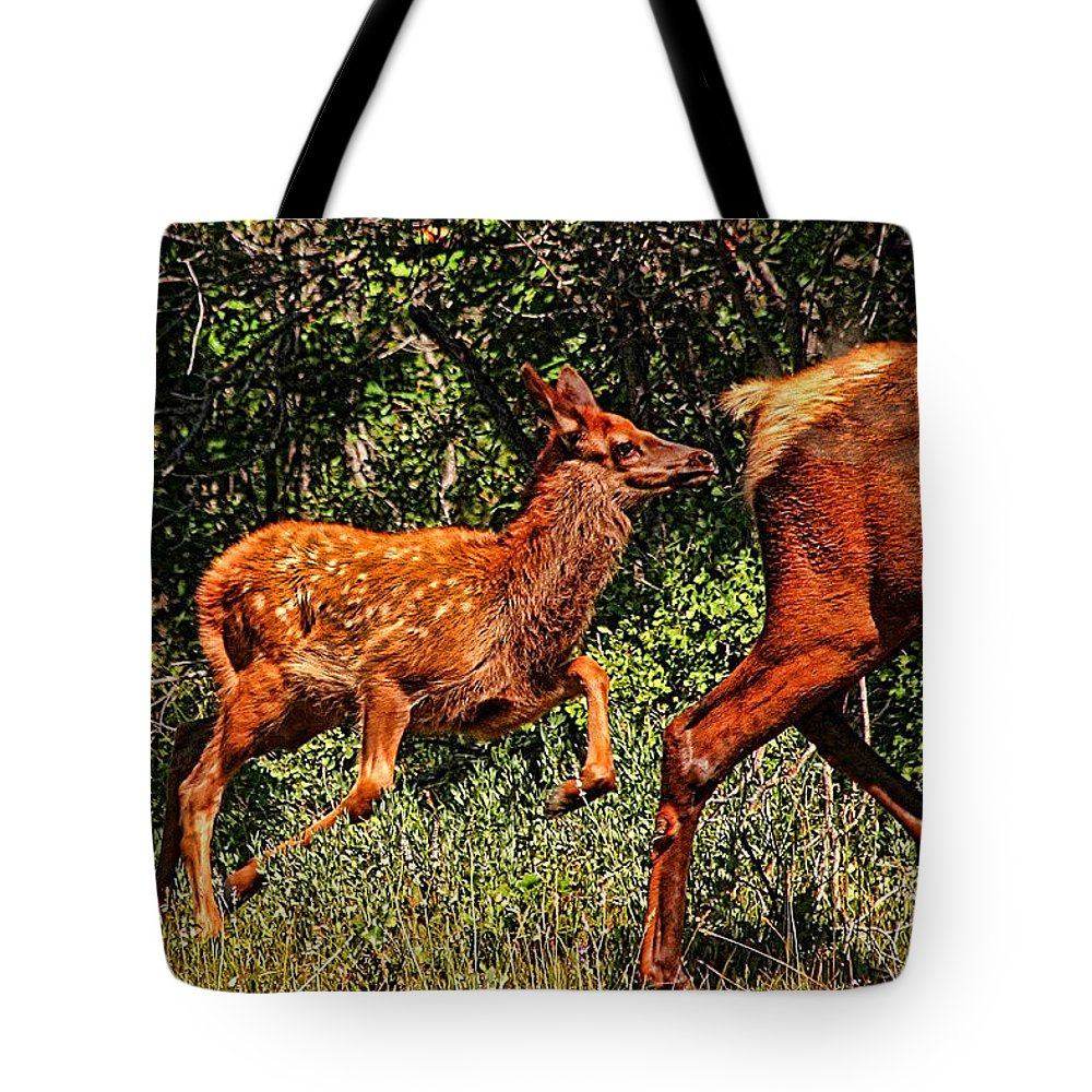 Fawn Tote Bag featuring the photograph Elk Fawn by Tommy Anderson