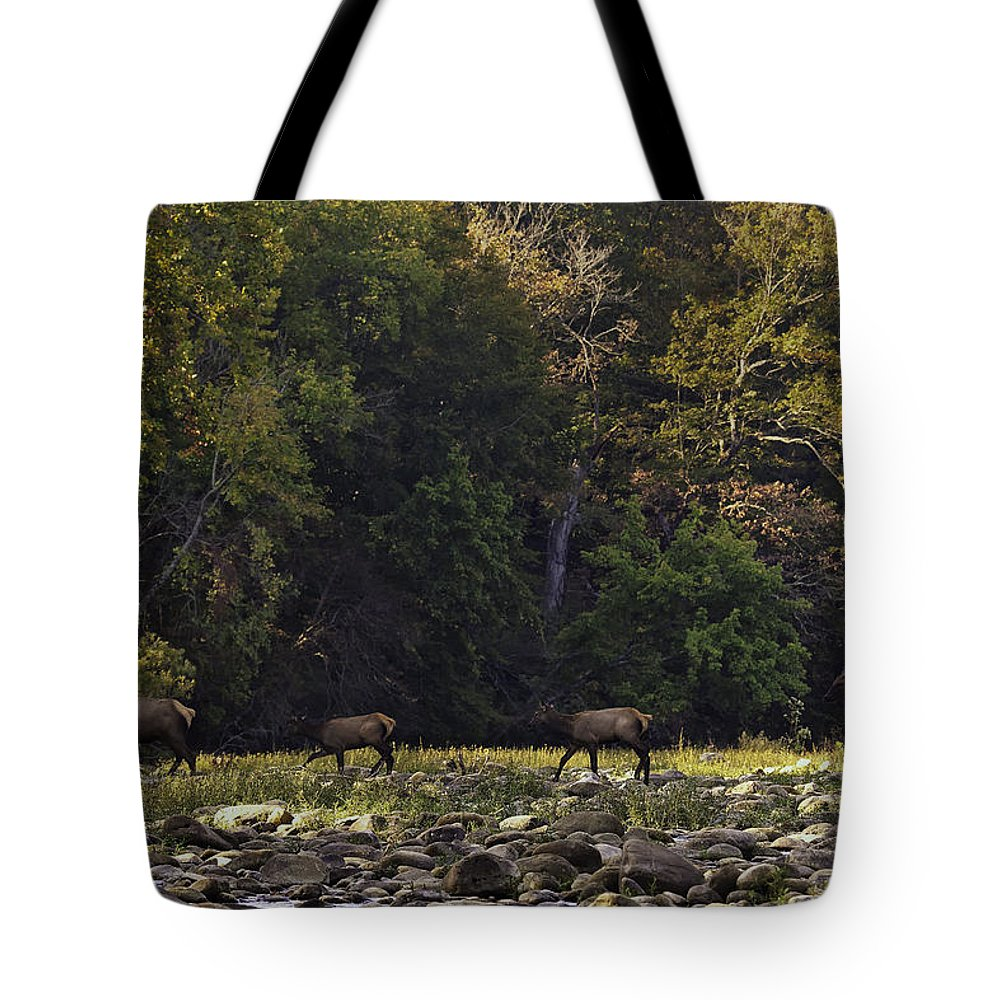Elk Tote Bag featuring the photograph Elk Herd Crossing Buffalo National River by Michael Dougherty