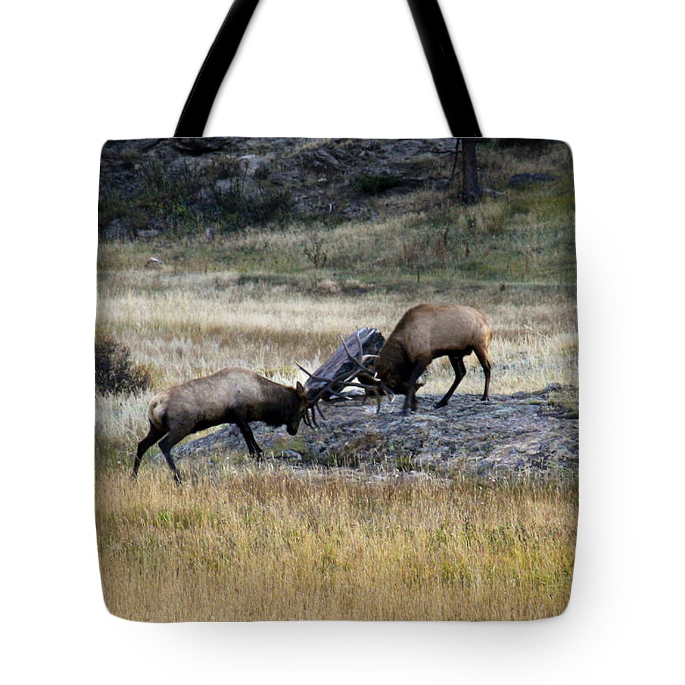 Elk Tote Bag featuring the photograph Elks Rutting by Marilyn Hunt