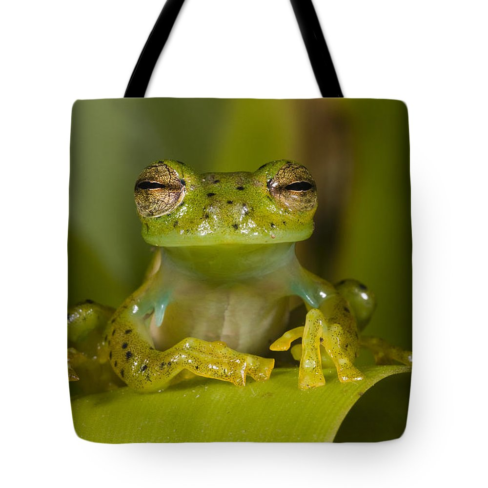 Mp Tote Bag featuring the photograph Emerald Glass Frog Centrolene by Pete Oxford