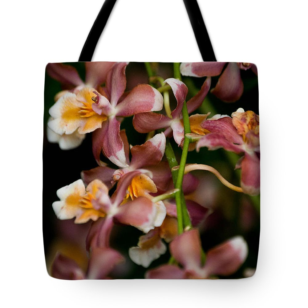 Flower Tote Bag featuring the photograph Emma's Orchid by Trish Tritz