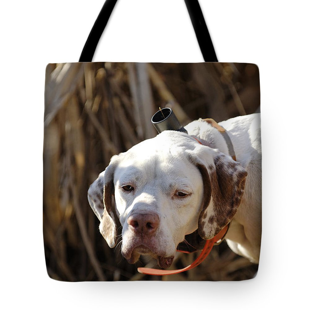 Portrait Tote Bag featuring the photograph English Pointer On Point - D004001 by Daniel Dempster