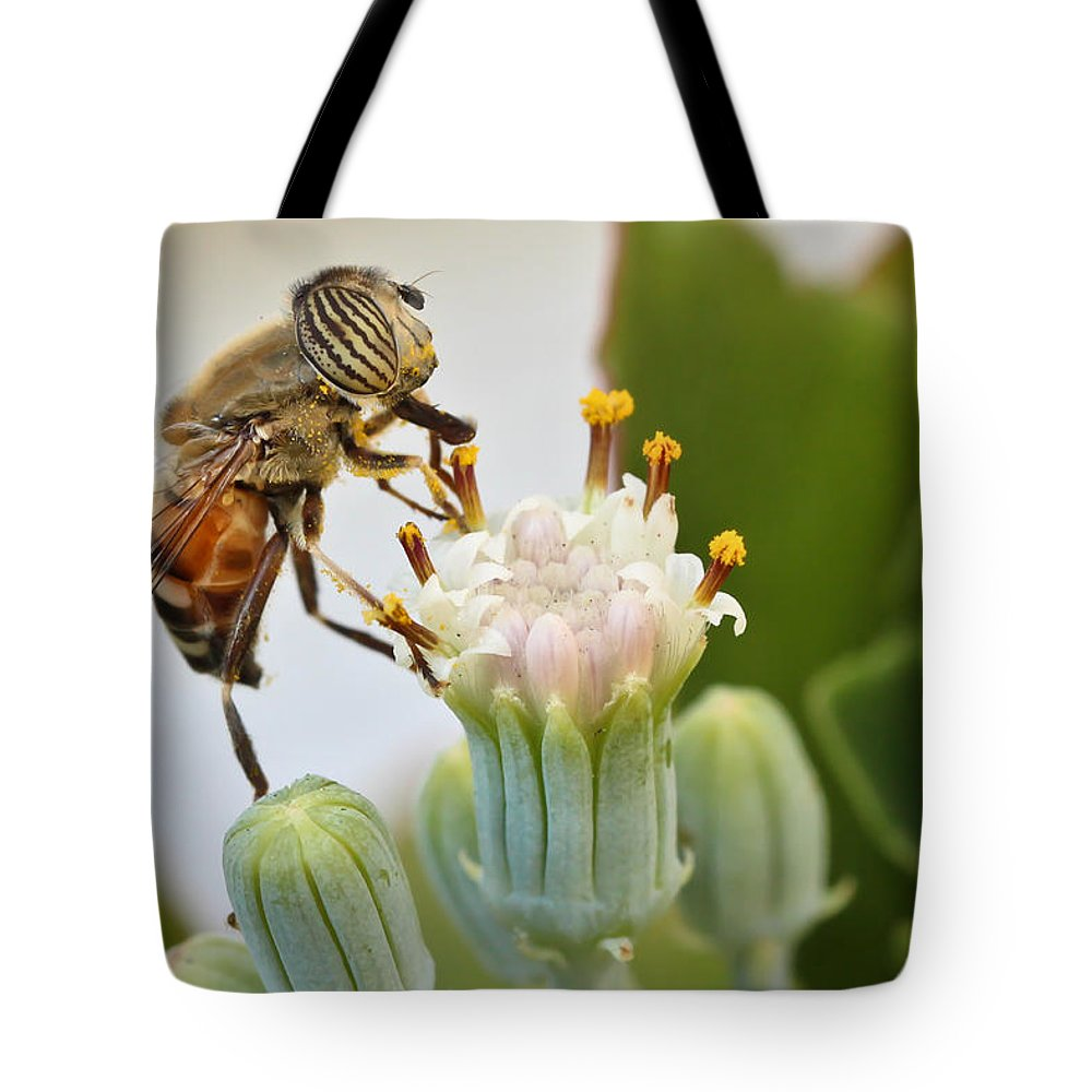 Hover Fly Tote Bag featuring the photograph Eristalinus Taeniops by Heidi Smith