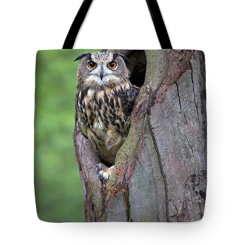 Nis Tote Bag featuring the photograph Eurasian Eagle-owl Bubo Bubo Looking by Rob Reijnen