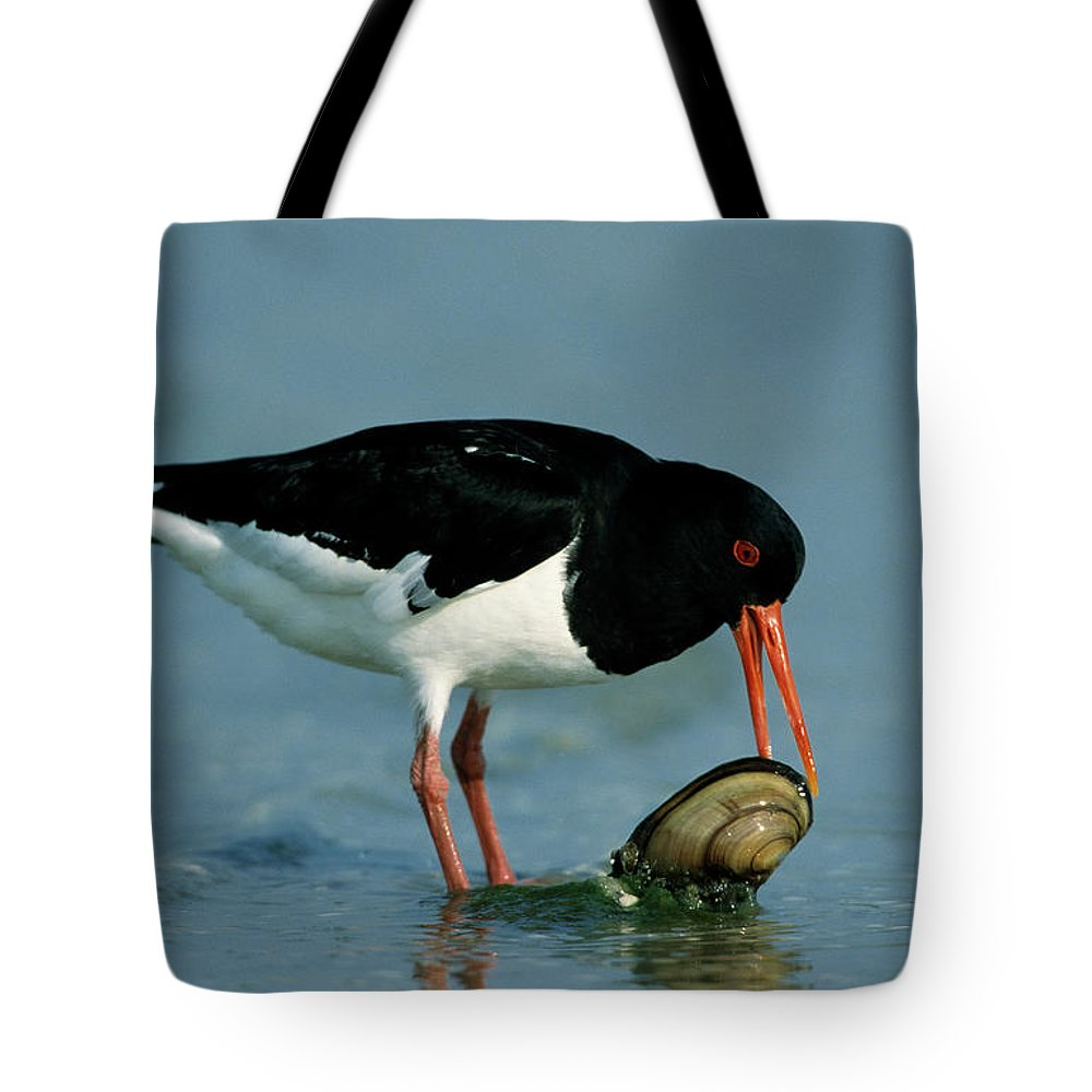 Fn Tote Bag featuring the photograph Eurasian Oystercatcher Haematopus by Martin Woike