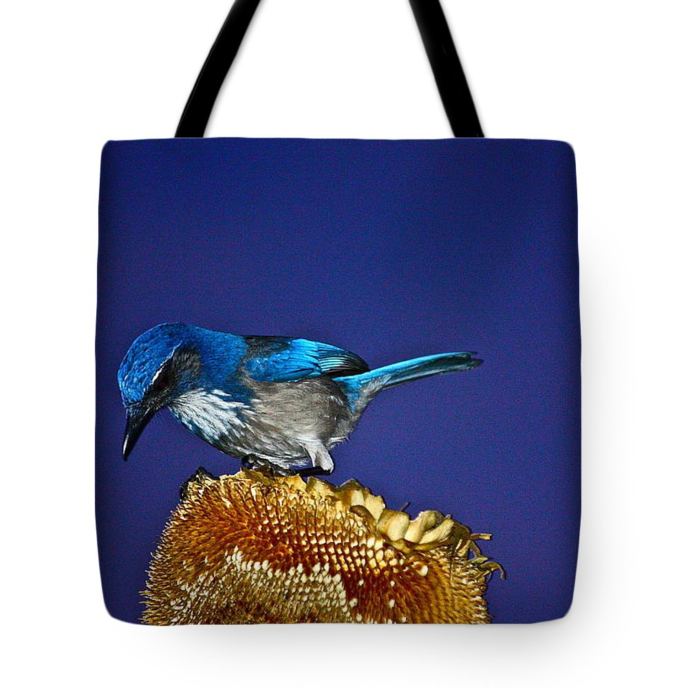 Birds Tote Bag featuring the photograph Evening Visitor by Diana Hatcher