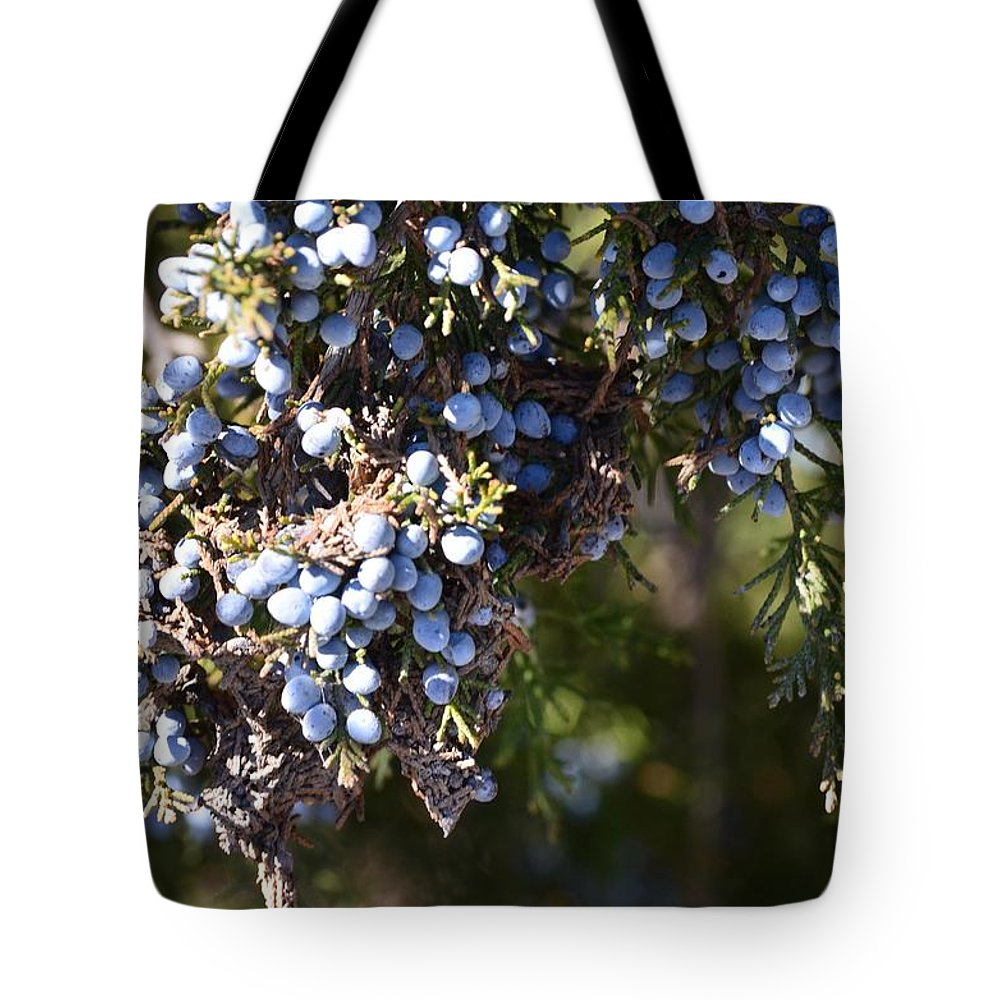 Evergreen Tote Bag featuring the photograph Evergreen by Maria Urso