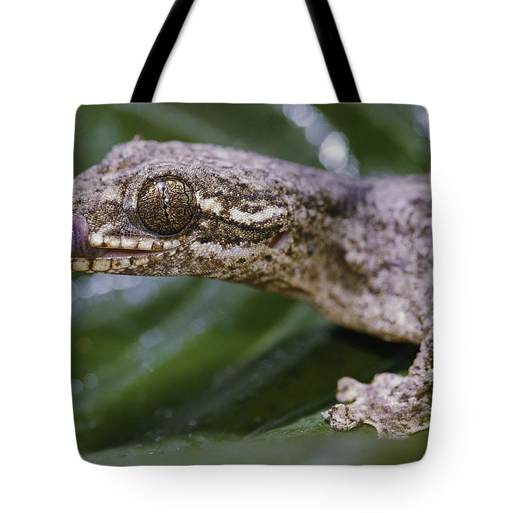 Amazonas State Tote Bag featuring the photograph Extreme Close-up Of A Gecko In The Rain by Mattias Klum
