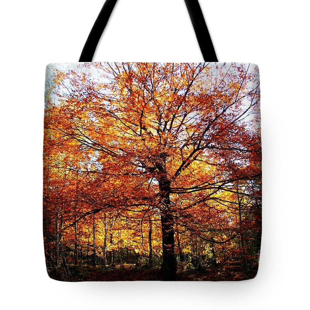 Eye Of The Forest Tote Bag featuring the photograph Eye Of The Forest by Mariola Bitner