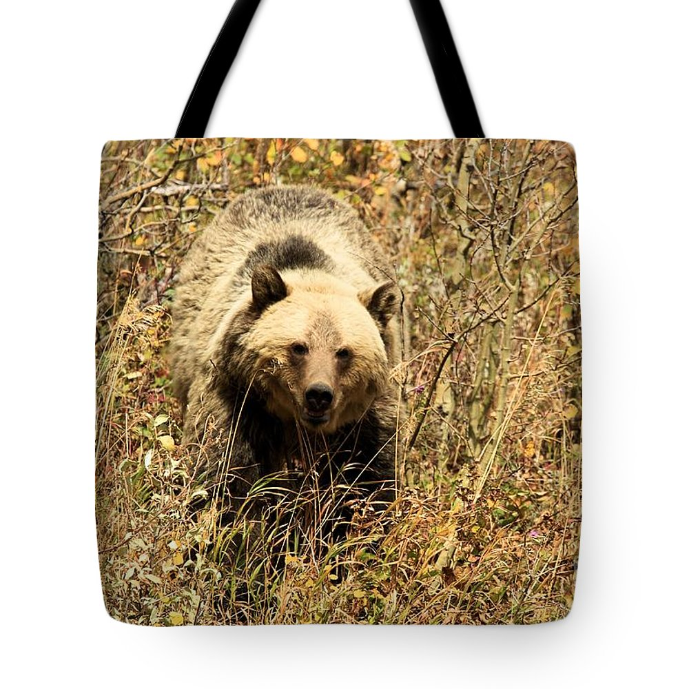 Grizzly Bear Tote Bag featuring the photograph Eyes On You by Adam Jewell