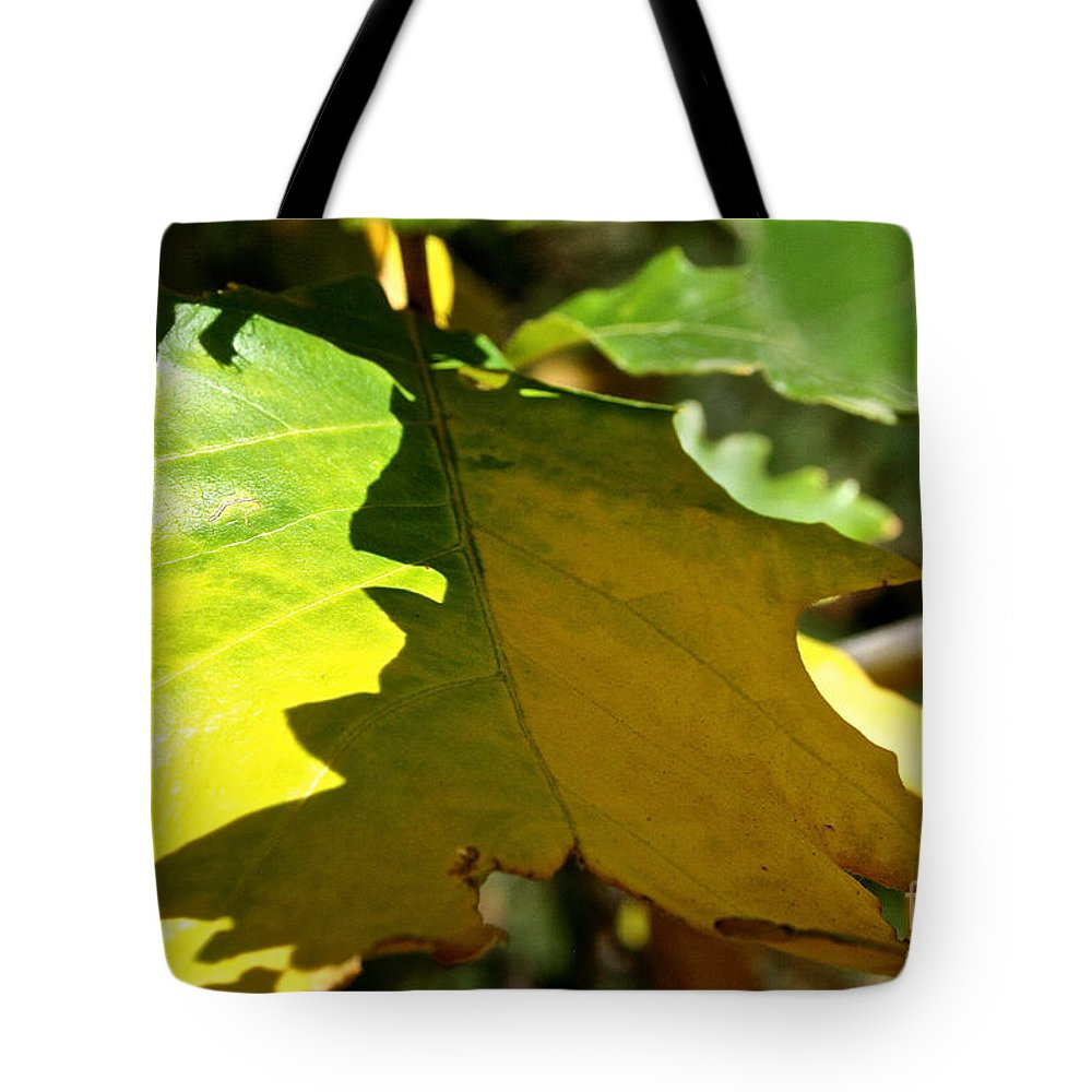 Tree Tote Bag featuring the photograph Fading Into Fall by Susan Herber
