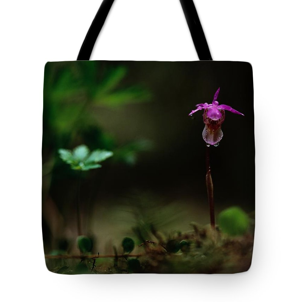 Europe Tote Bag featuring the photograph Fairy Slipper Orchid Calypso Bulbosa by Mattias Klum