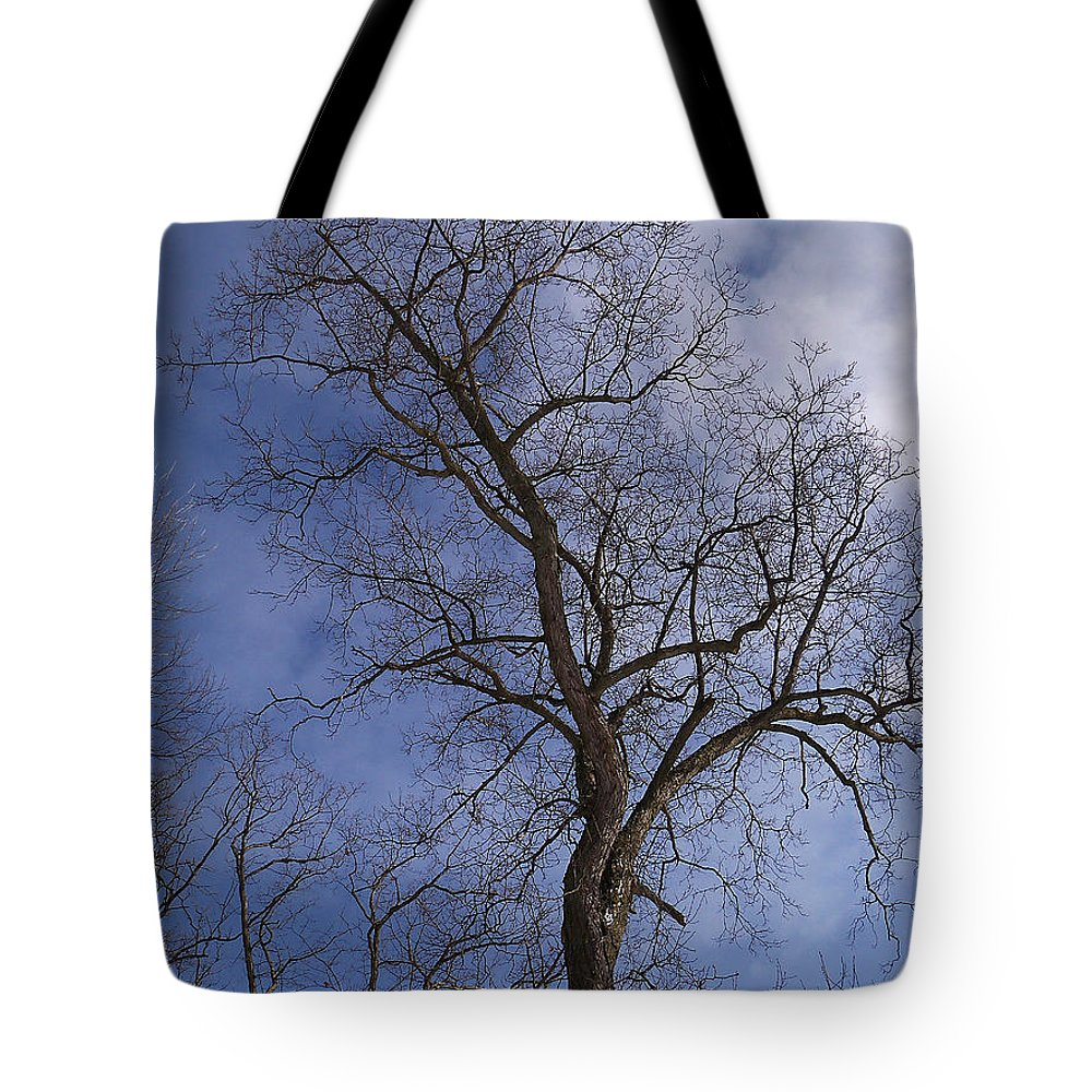Trees Tote Bag featuring the photograph Fairy Tale Tree by Corinne Elizabeth Cowherd