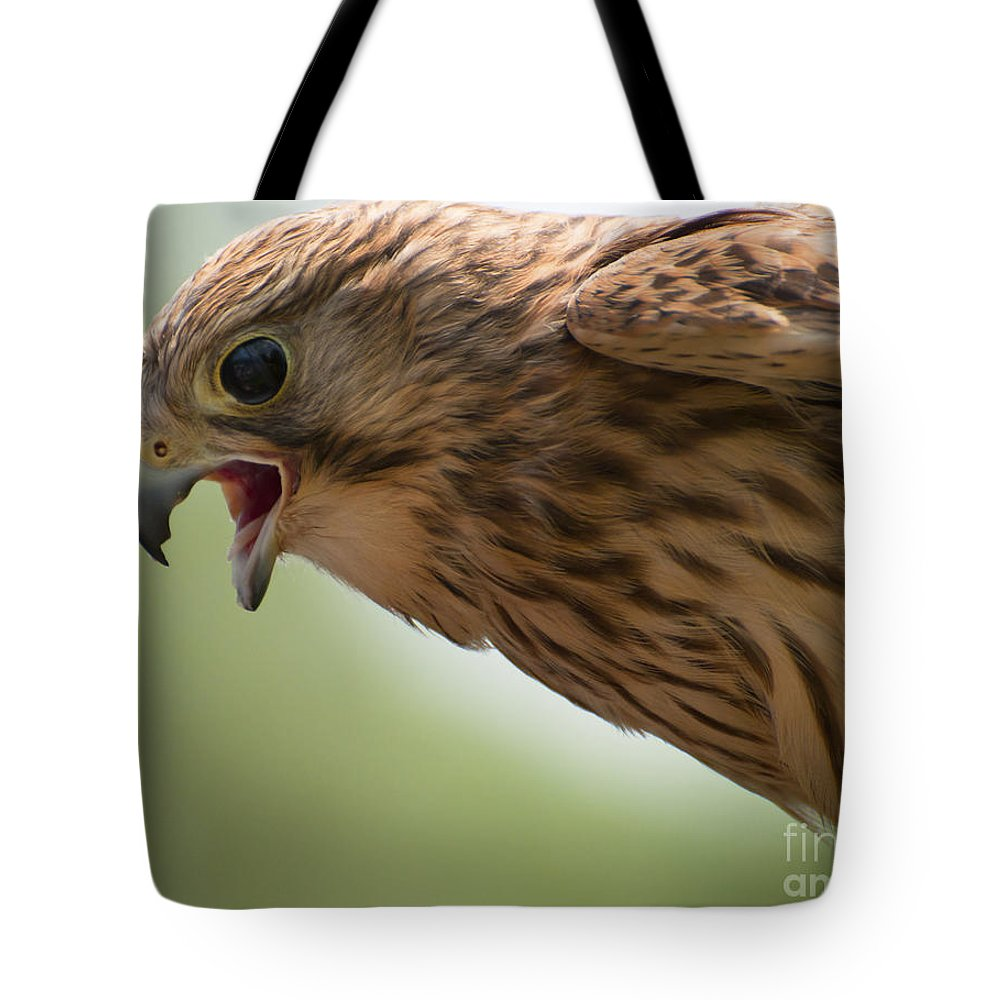Europe Tote Bag featuring the photograph Falcon by Andrew Michael