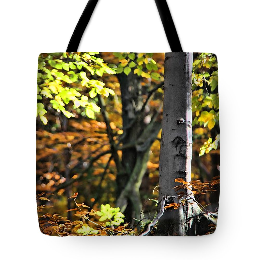 Fall Beauty Tote Bag featuring the photograph Fall Beauty by Mariola Bitner