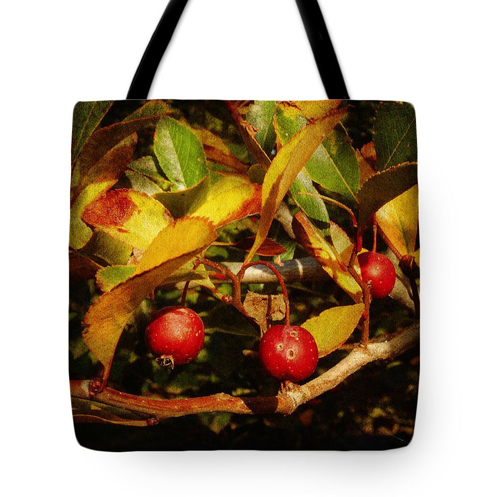 Brown Tote Bag featuring the photograph Fall Colors by Milena Ilieva