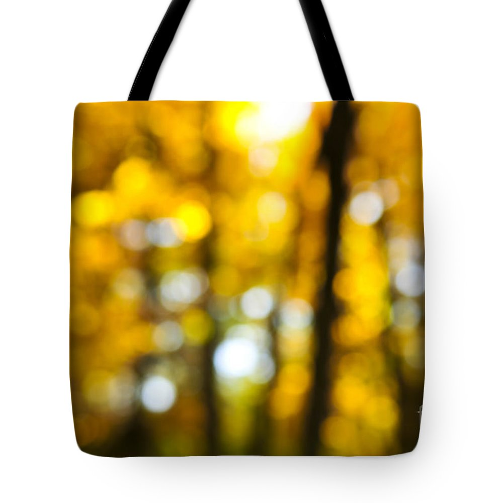 Nature Tote Bag featuring the photograph Fall Forest In Sunshine by Elena Elisseeva