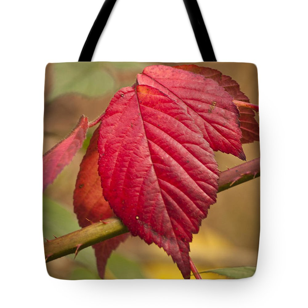 Autumn Leaves Tote Bag featuring the photograph Fall Leaves by Steve Purnell