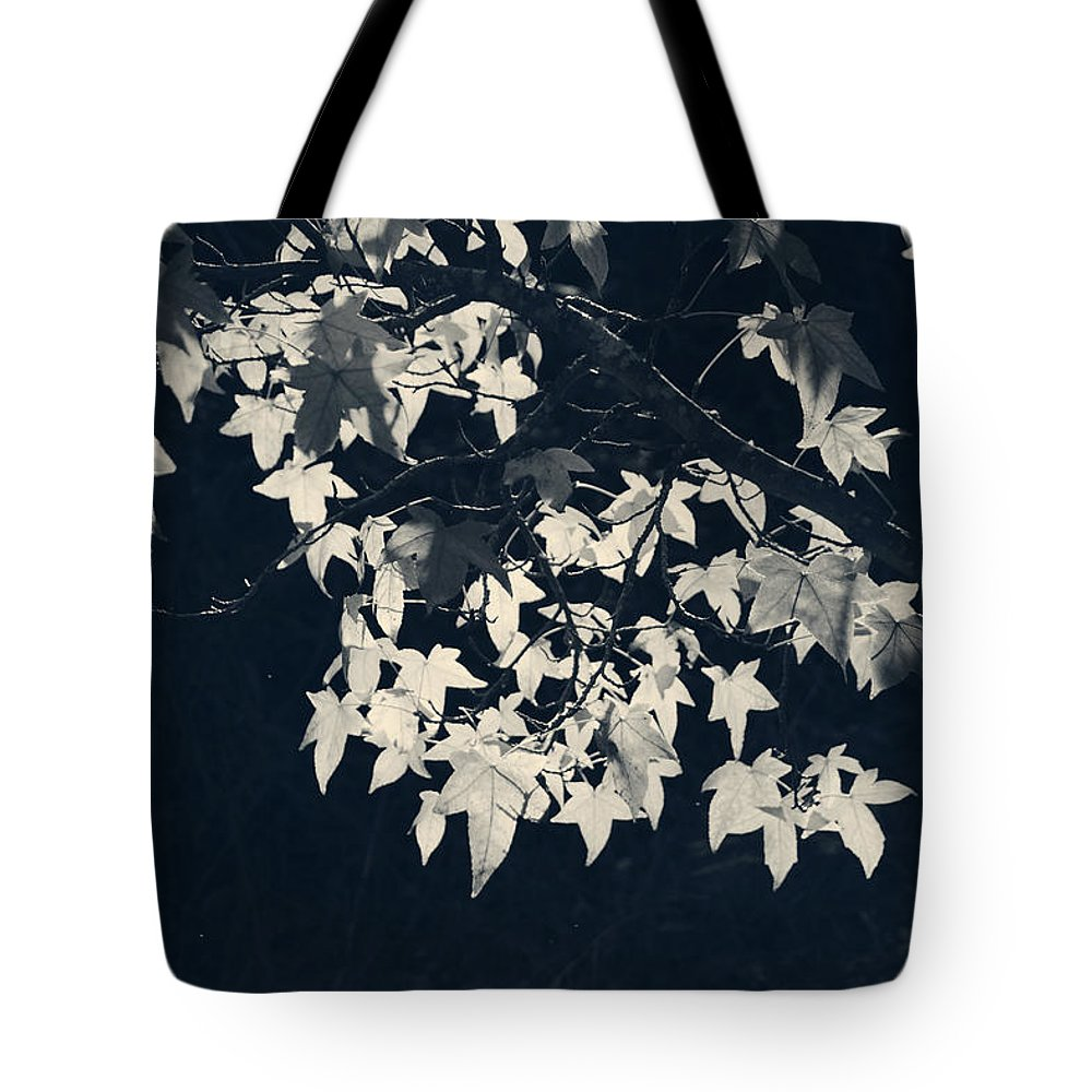 Trees Tote Bag featuring the photograph Falling Stars by Laurie Search