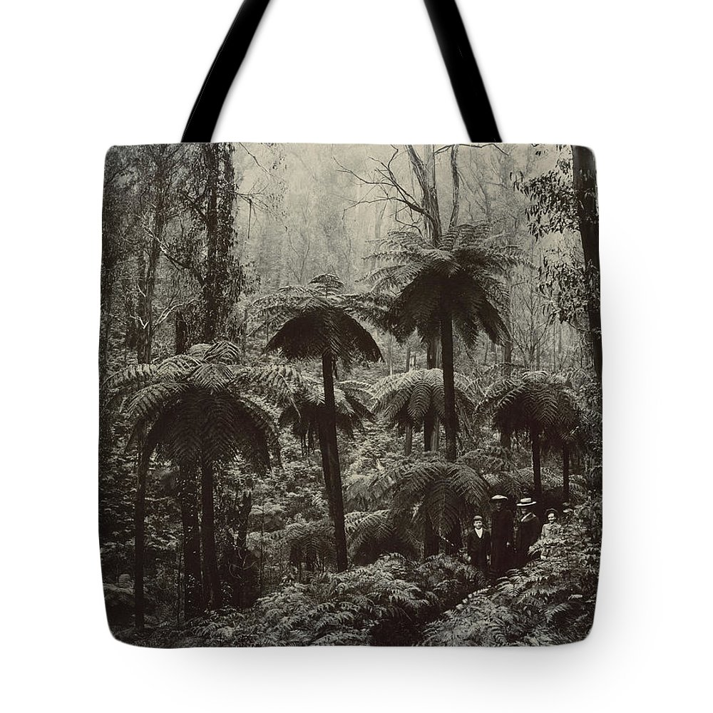 Photography Tote Bag featuring the photograph Family Walking Through A Forest Of Tree by Nicholas John Caire