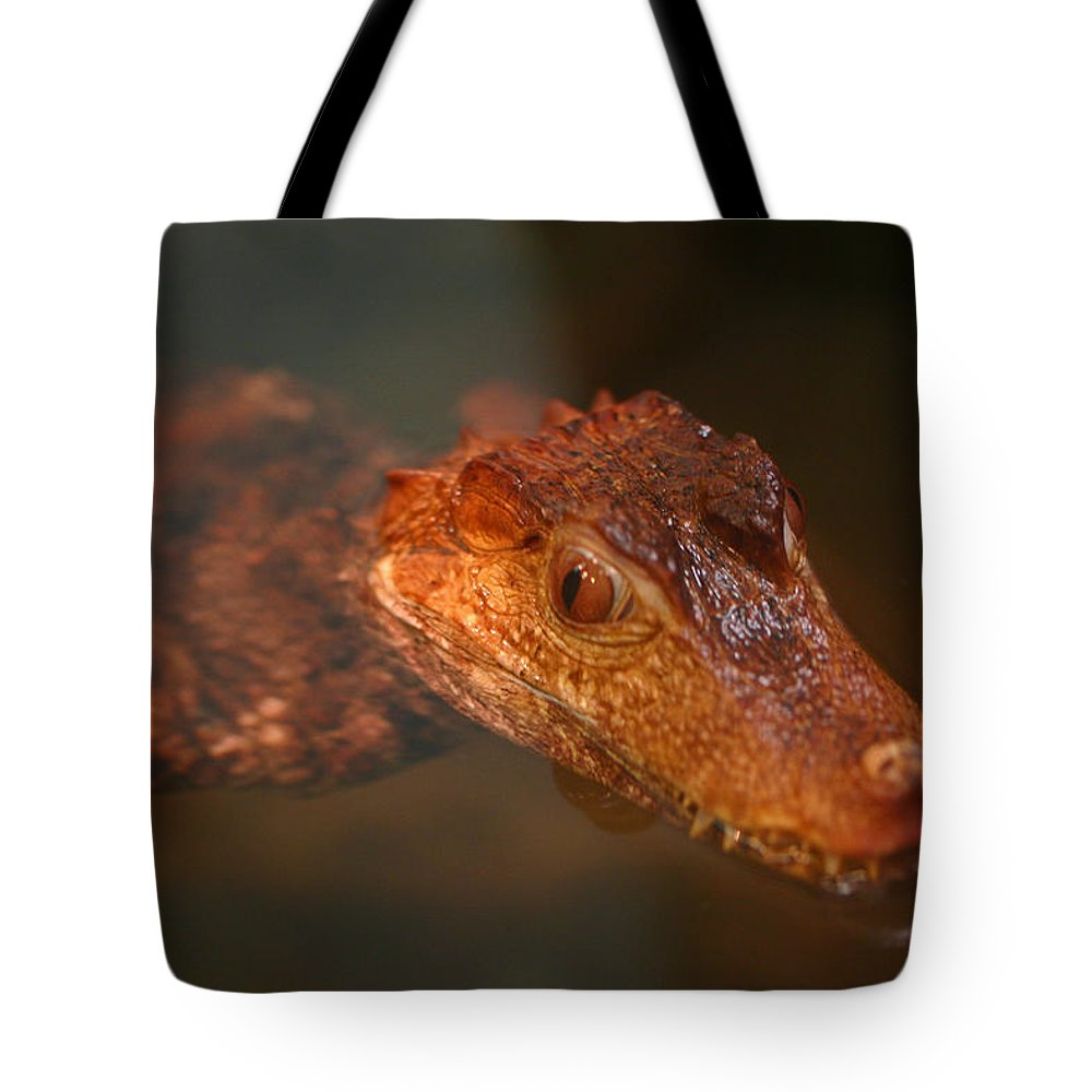Zoo Tote Bag featuring the photograph Fangs by David Rucker