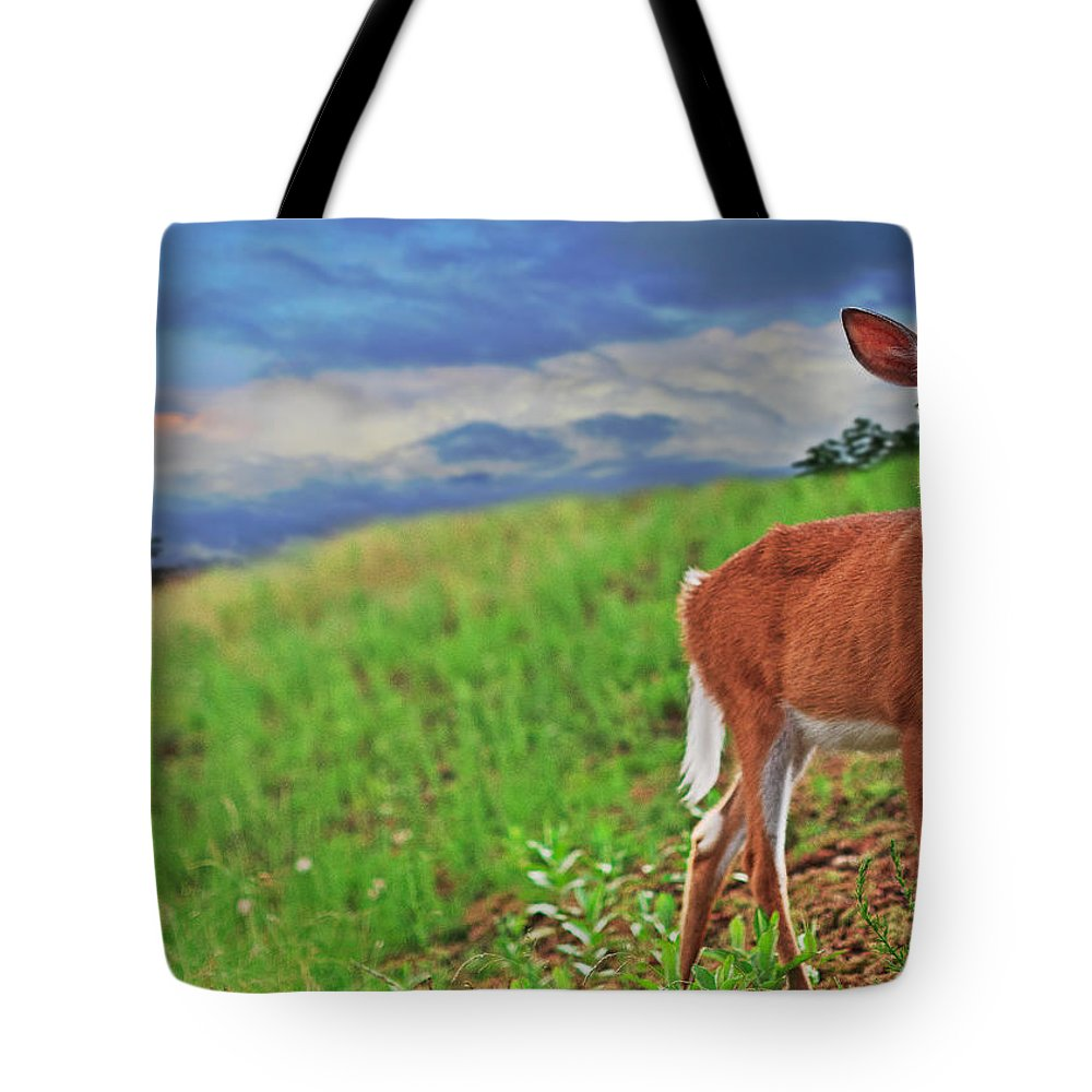 Deer Tote Bag featuring the photograph Fawn by Everet Regal
