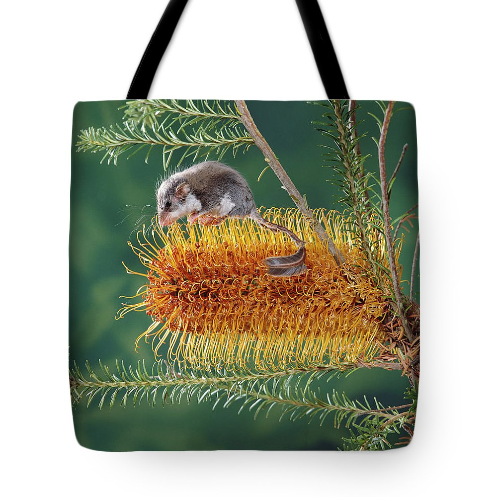 Ai Tote Bag featuring the photograph Feather-tail Glider Acrobates Pygmaeus by Jean-Paul Ferrero