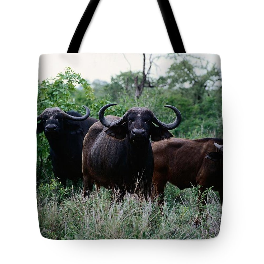 Kruger National Park Tote Bag featuring the photograph Female Cape Buffalo Syncerus Caffer by Nicole Duplaix