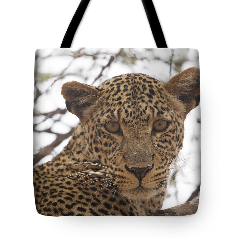 2012 Tote Bag featuring the photograph Female Leopard Close-up by Howard Kennedy