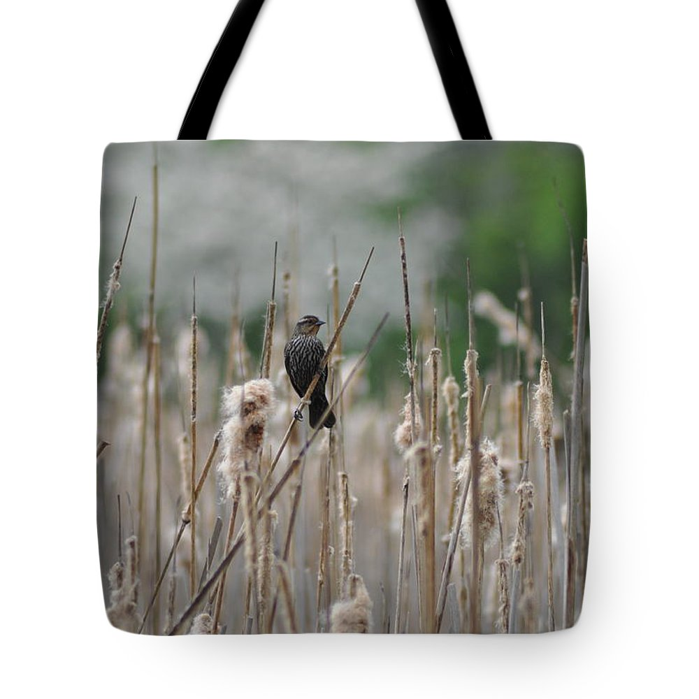 Female Redwinged Blackbird Tote Bag featuring the photograph Female Redwinged Blackbird by Bill Cannon
