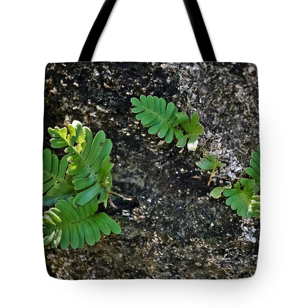 Ferns Tote Bag featuring the photograph Fern And Coquina by DigiArt Diaries by Vicky B Fuller