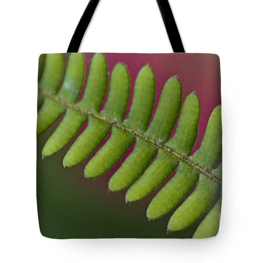 Heiko Tote Bag featuring the photograph Fern Leaf by Heiko Koehrer-Wagner