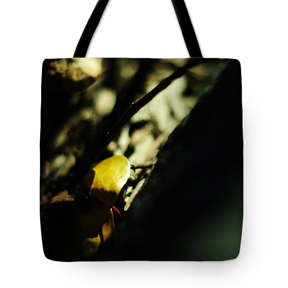 Gold Tote Bag featuring the photograph Finding Gold by Rebecca Sherman
