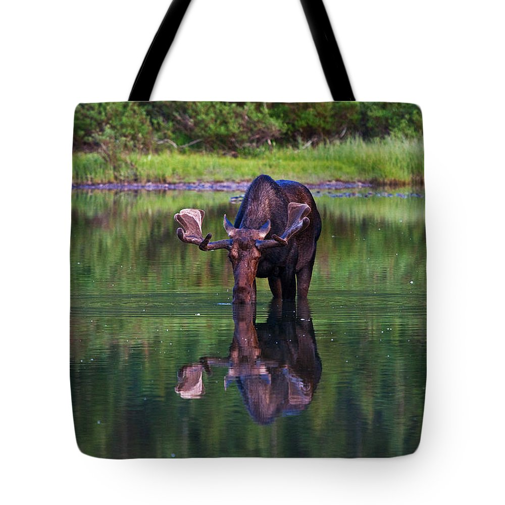 Alces Alces Tote Bag featuring the photograph Fishercap Bull by Mark Kiver