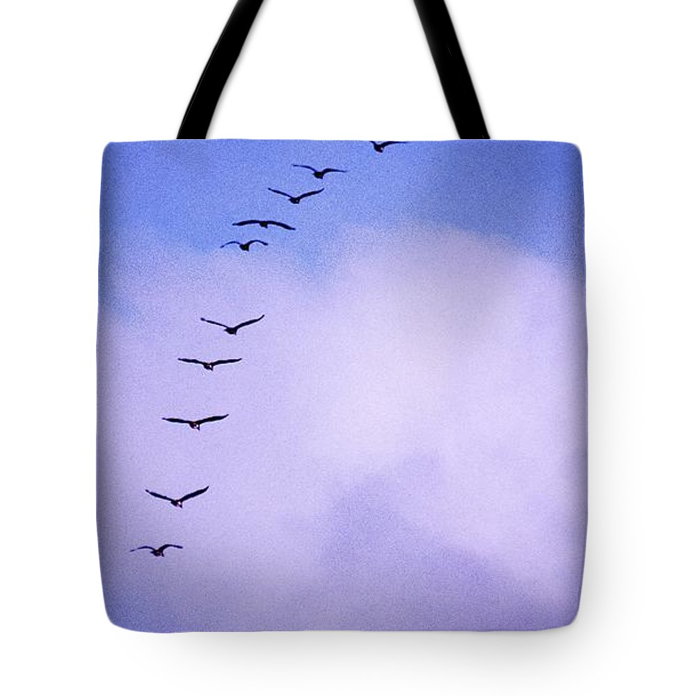 Africa Tote Bag featuring the photograph Flight Stripe by Alistair Lyne