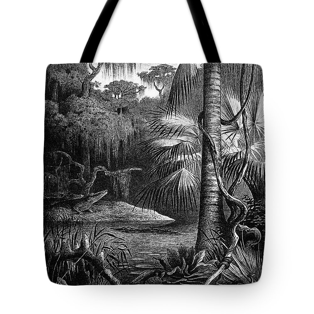 19th Century Tote Bag featuring the photograph Florida: Swamp by Granger