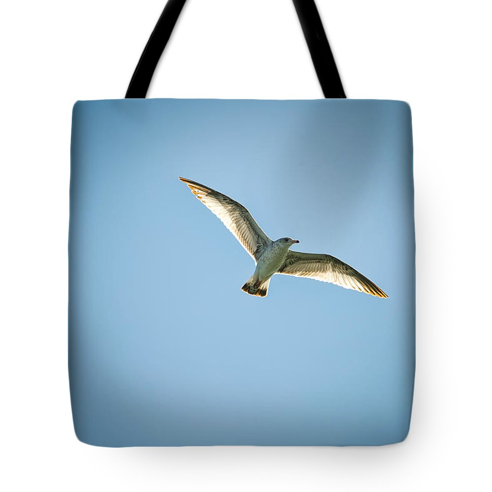 Bird Tote Bag featuring the photograph Fly by Cindy Tiefenbrunn