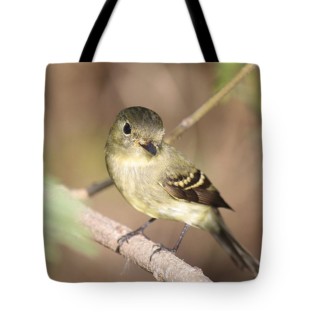 Roena King Tote Bag featuring the photograph Flycatcher On A Branch by Roena King