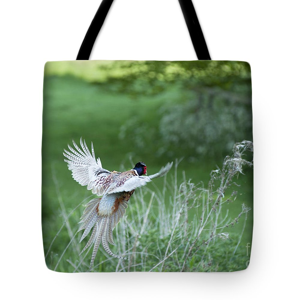 2011 Tote Bag featuring the photograph Flying Pheasant by Andrew Michael