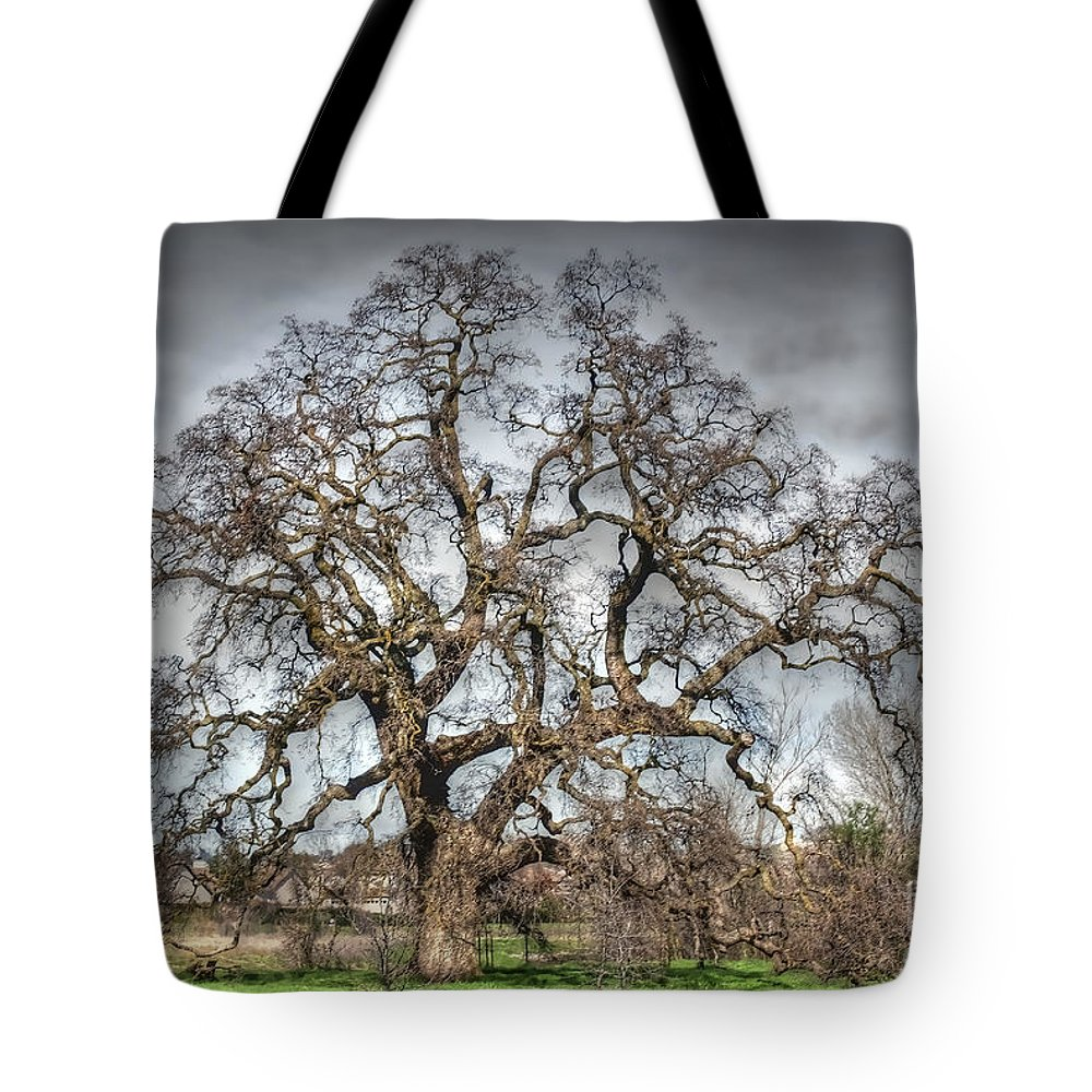 Oak Tote Bag featuring the photograph Folsom Oak Tree by Diego Re