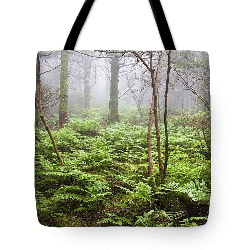 Roan Mountain Tote Bag featuring the photograph Forest Ferns On A Foggy Morning by Bill Swindaman