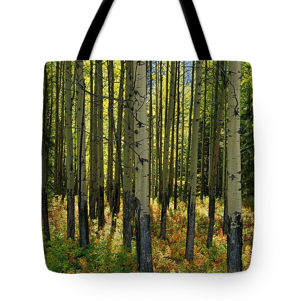 Banff Tote Bag featuring the photograph Forest Floor In Autumn, Bow Valley by Mike Grandmailson