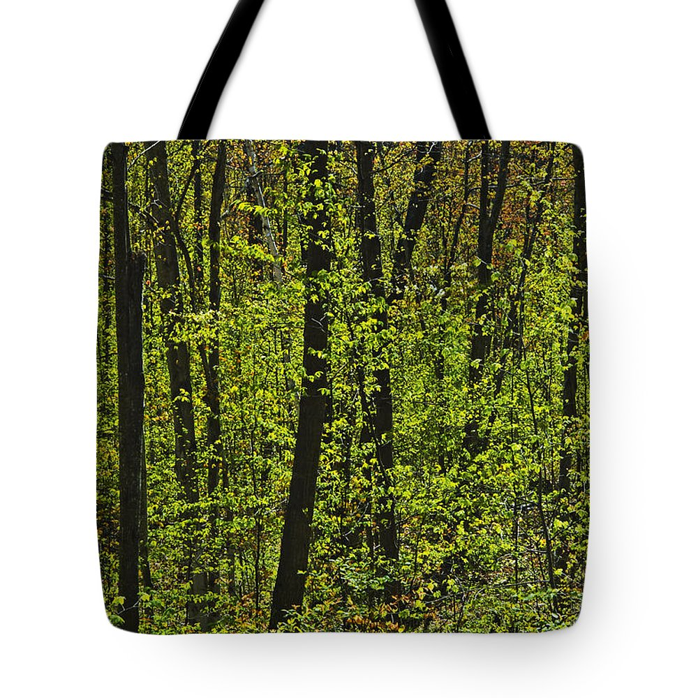 Color Images Tote Bag featuring the photograph Forest In Spring Foliage, Six Mile Lake by Mike Grandmailson