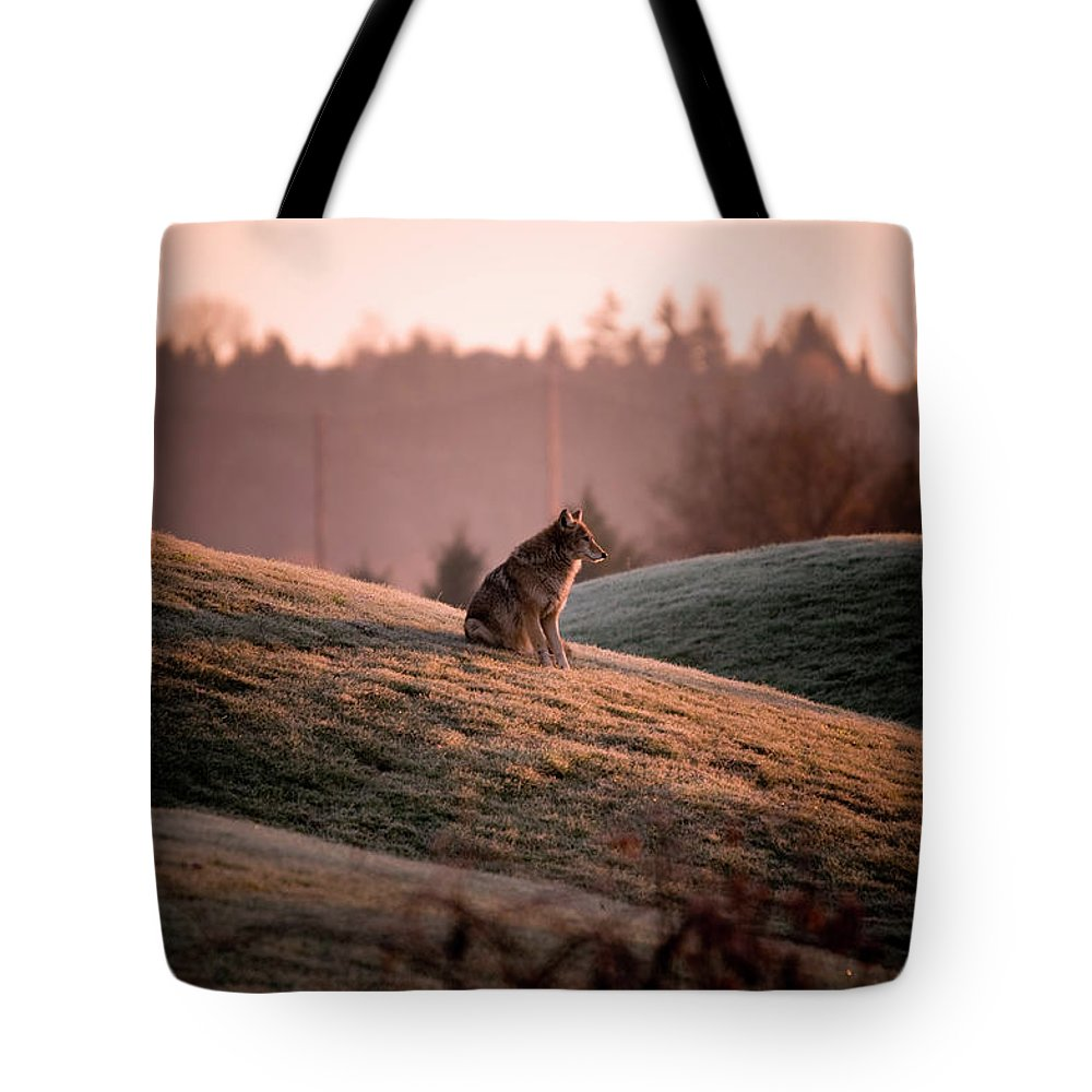 Coyote Tote Bag featuring the photograph Forlorn Two by Martin Cooper