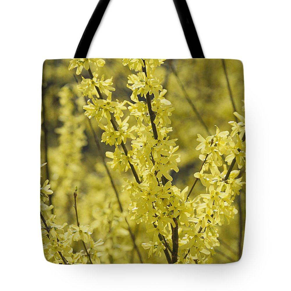 Scenes And Views Tote Bag featuring the photograph Forsythia In Full Bloom by Darlyne A. Murawski
