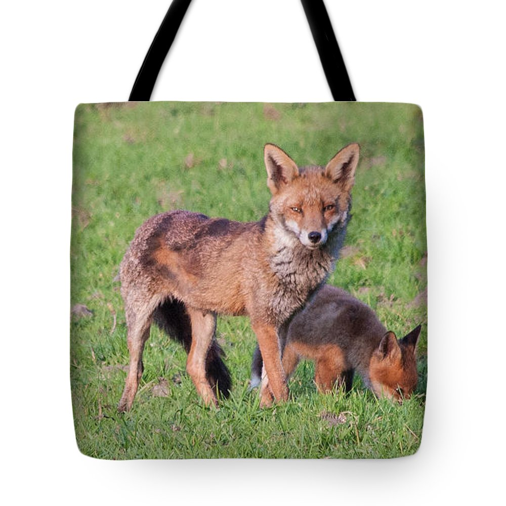 Dawn Oconnor Dawnoconnorphotos@gmail.com Tote Bag featuring the photograph Fox And Baby by Dawn OConnor