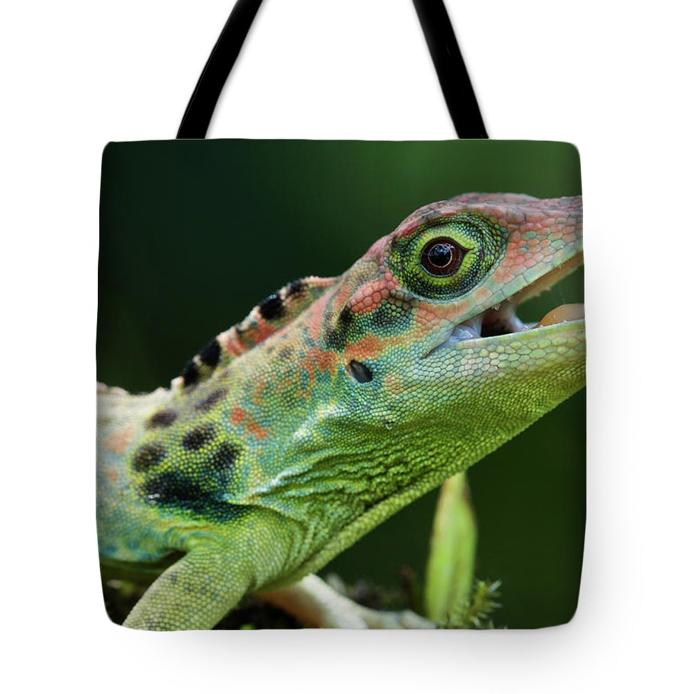 Fn Tote Bag featuring the photograph Frasers Anole Anolis Fraseri Male by James Christensen