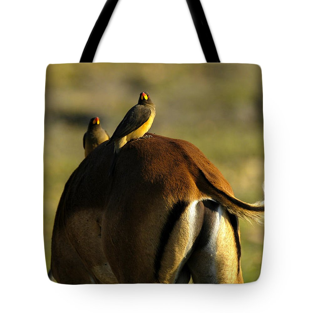 Action Tote Bag featuring the photograph Free Ride by Alistair Lyne