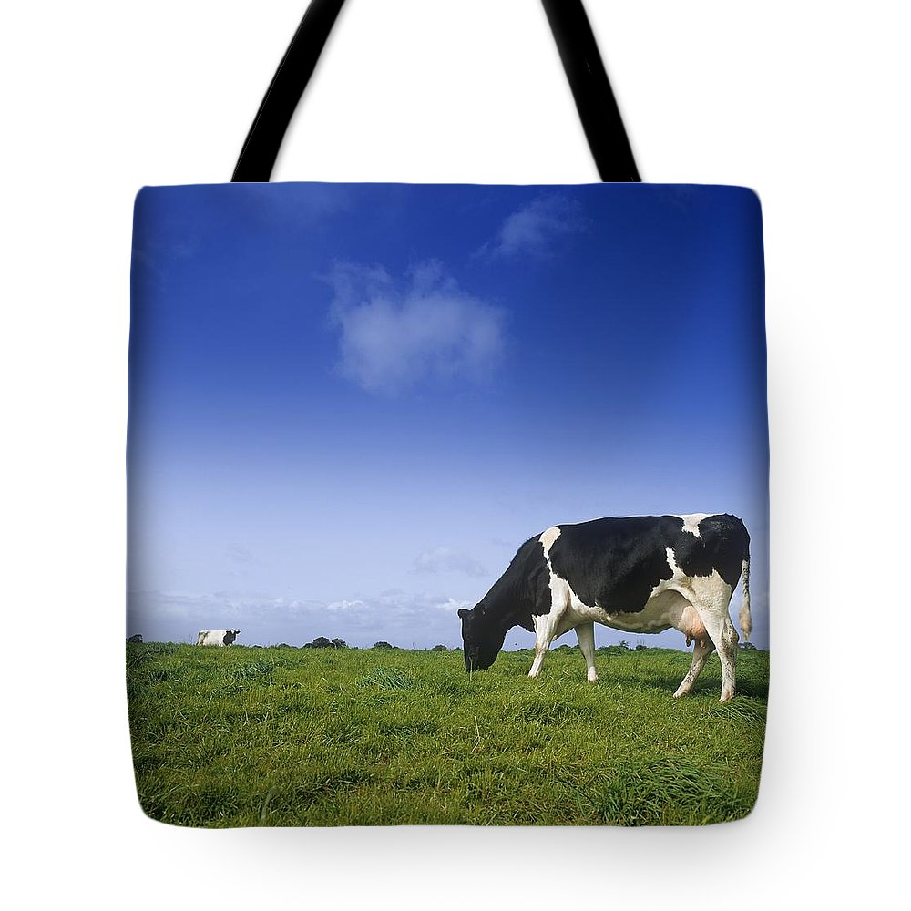 Animal Themes Tote Bag featuring the photograph Friesian Cow Grazing In A Field by The Irish Image Collection
